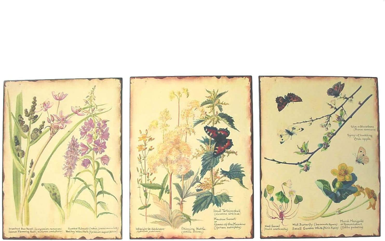Desconocido Set 3 Cuadros Placa Metal Chapa Antigua OXIDO Flores Mariposa Botanica Variado