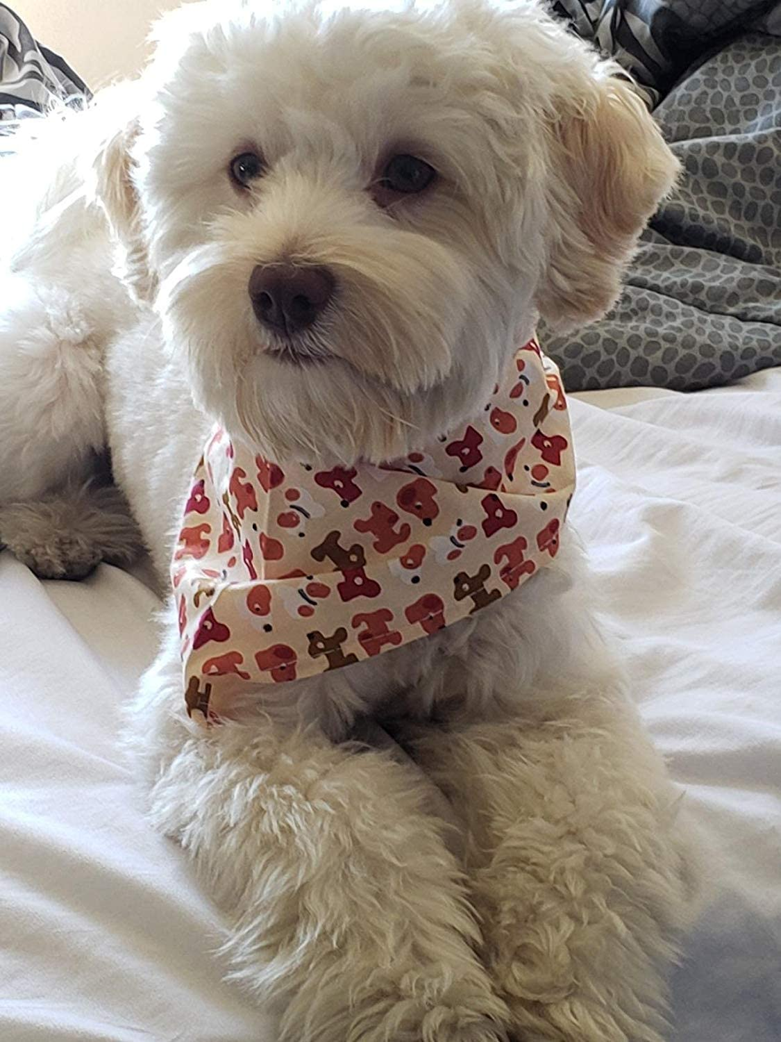 MEWTOGO Dog Bandanas - Washable and Reversible Triangle Cotton Dog Bibs Scarf Assortment Suitable for Puppy Small and Medium Pet 717p979NslL
