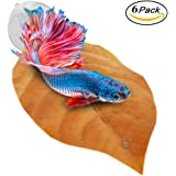 Betta Bed Kit by Sungrow: Comfortable Rest Area for Betta Fish: Improves health by Simulating Betta's Natural Habitat: Natural & Organic Hammock, Non-plastic, BPA-free