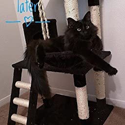 Amazon Com Go Pet Club Brown 62 Cat Condo F68 Cat Trees Pet Supplies