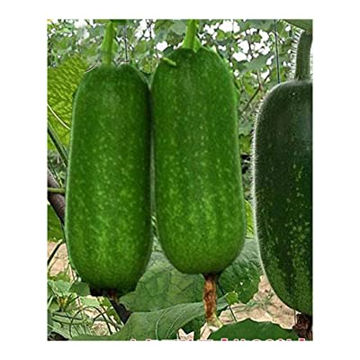 Hairy Gourd Fuzzy Gourd 60 Seeds Mao Qwa Smaller Tong Qwa Little Winter Melon Chinese Vegetable Organic Seeds for Planting 原装彩包毛瓜节瓜种子 : Garden & Outdoor