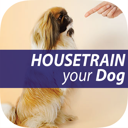 The Untold Secret to Mastering Indoor House Training for Dog in Just 7 Days