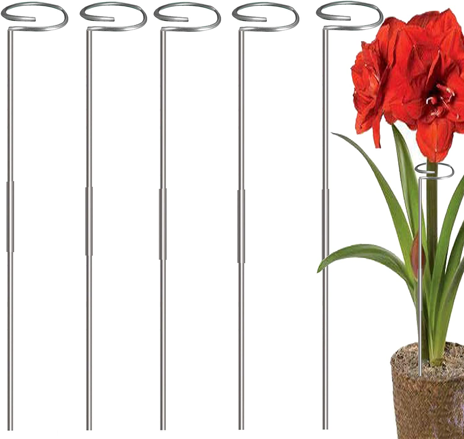 RAIKEDR 30 Inch Plant Stakes for Flowers - 5 Pack, Stainless Steel Garden Tall Single Stem Support Stake Plant Cage Support Rings for Flowers Amaryllis Tomatoes Peony Lily Rose Narcissus (0.84, 5)