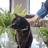Pettsie Cat Collar Breakaway Safety and