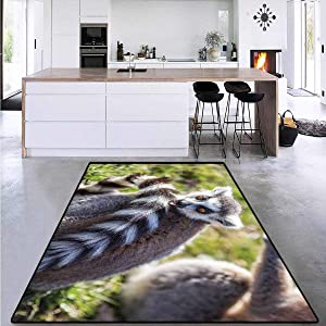 """Girls Rooms Kids Rooms Nursery Decor Mats, Ring Tailed Funny Expression, Living Dining Room Bedroom Hallway Office Carpet 5'8""""x8'5"""""""