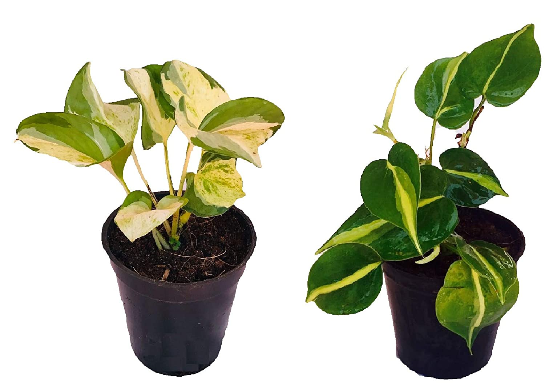 Live Plants-Women's Day