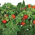 Miracle-Gro AeroGarden kit de capsules de graines de tomates cerise rouges traditionnelles (6 capsules)