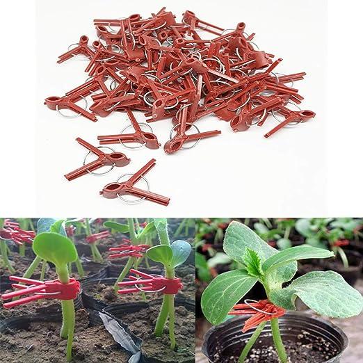 Sarplle Plant Clips 100 Piezas de Clips de Plantas para injertar ...