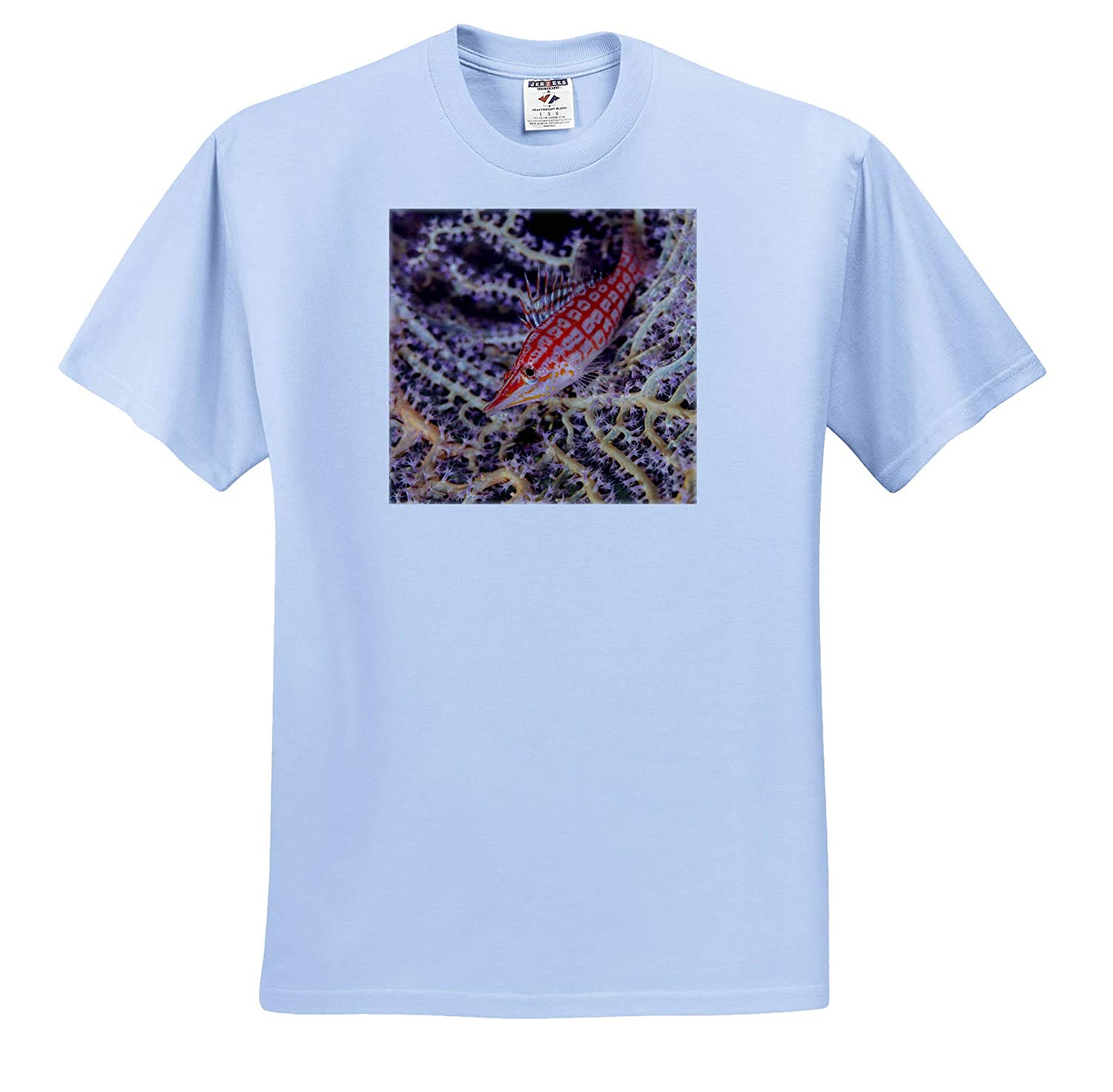South Pacific - Adult T-Shirt XL Fish ts/_314019 Solomon Islands Close-up of Longnose hawkfish 3dRose Danita Delimont