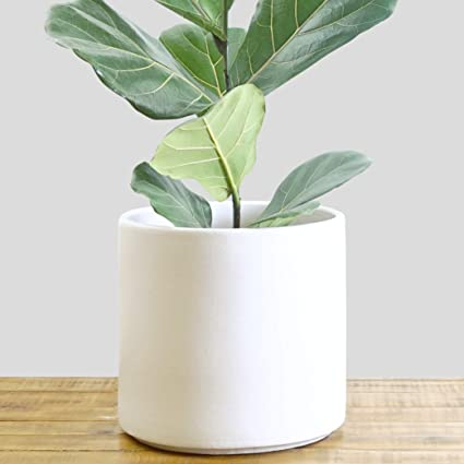 Amazoncom Indoor Flower Pot Large Modern Planter Terracotta
