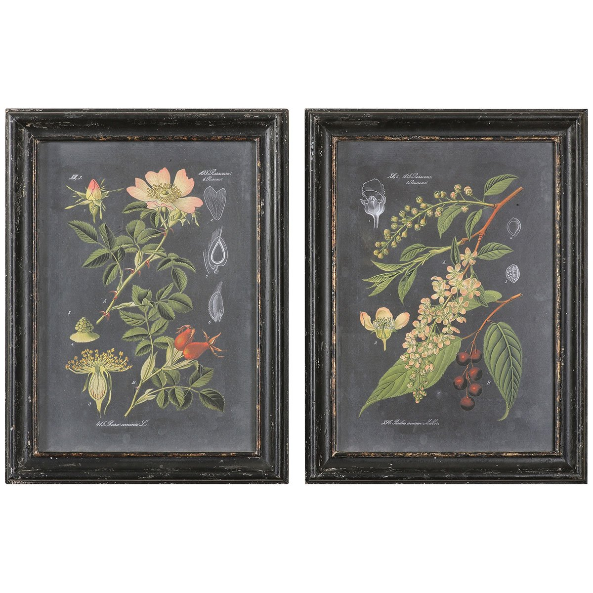 Amazon.com: Uttermost 56053 Midnight Botanicals Wall Art (Set Of 2):  Posters U0026 Prints