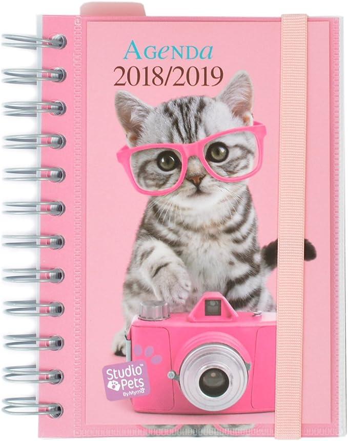 Grupo Erik Editores Studio Pets - Agenda escolar en español con diseño gato, 11.4 x 16 cm: Amazon.es: Oficina y papelería