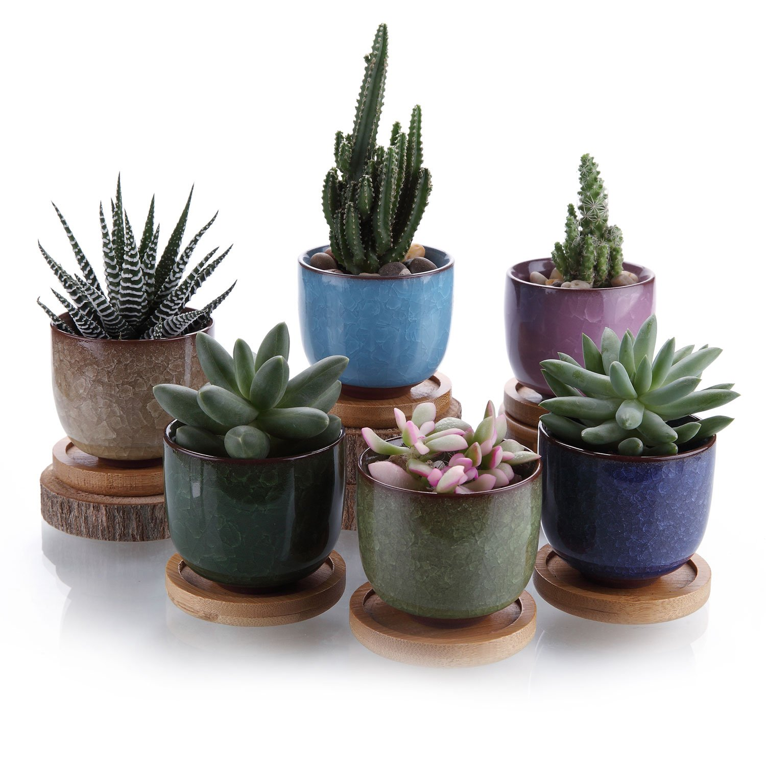 T4U 2.5 Inch Ceramic Ice Crack Zisha Raised Serial Sucuulent Plant Pot/Cactus Plant Pot Flower Pot/Container/Planter with Bamboo Trays Full colors Package 1 Pack of 6 by T4U