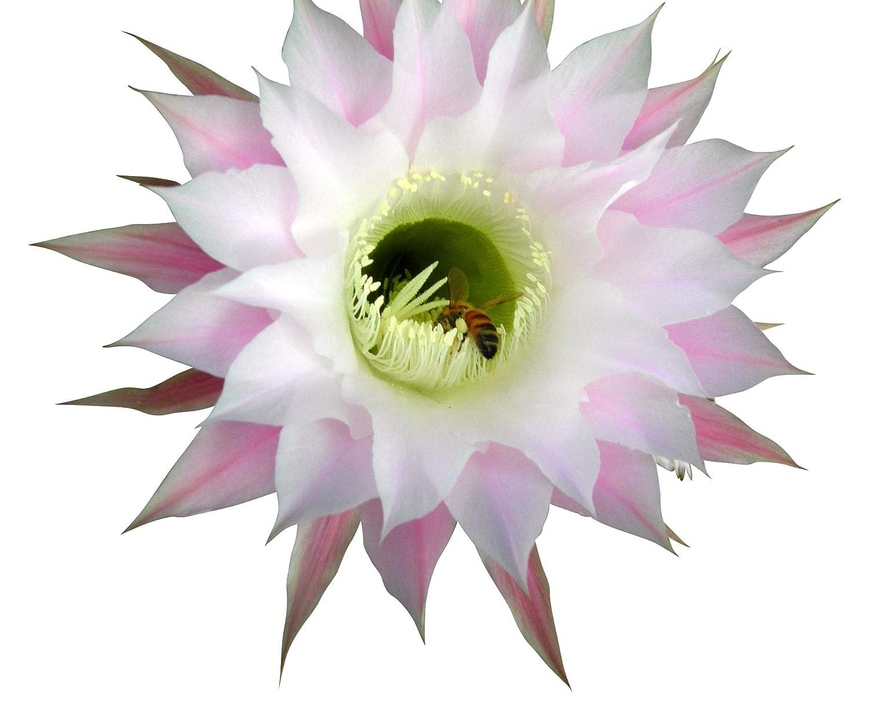 Cactus & Succulent Seed Mix - 100 seeds CactusPlaza.com