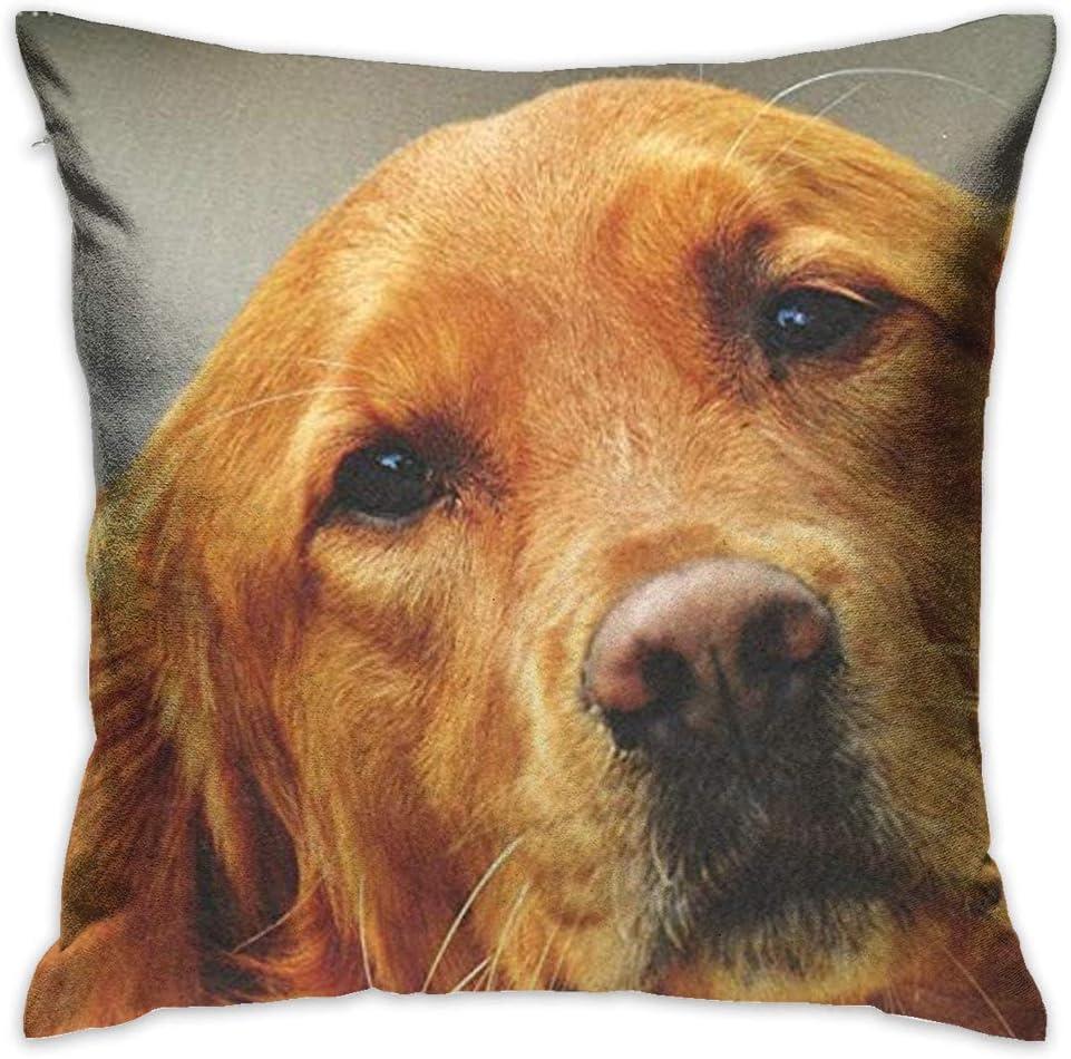 Throw Pillow Cover Golden Retriever Face Decorative Pillow Case Decor Square 18x18 Inch Cushion Pillowcase