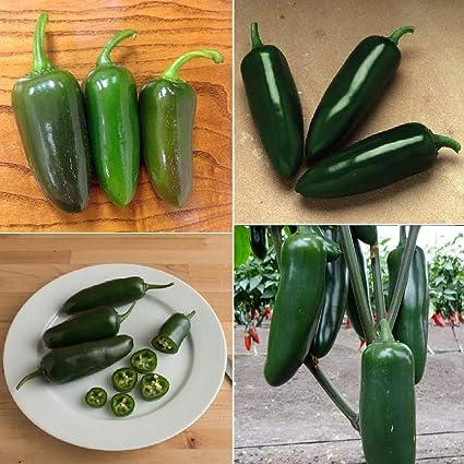 Amazon com : David's Garden Seeds Collection Set Pepper