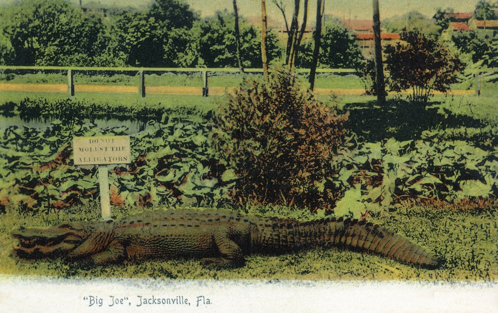 Amazon.com: Jacksonville, Florida - Alligator by a Do Not ...