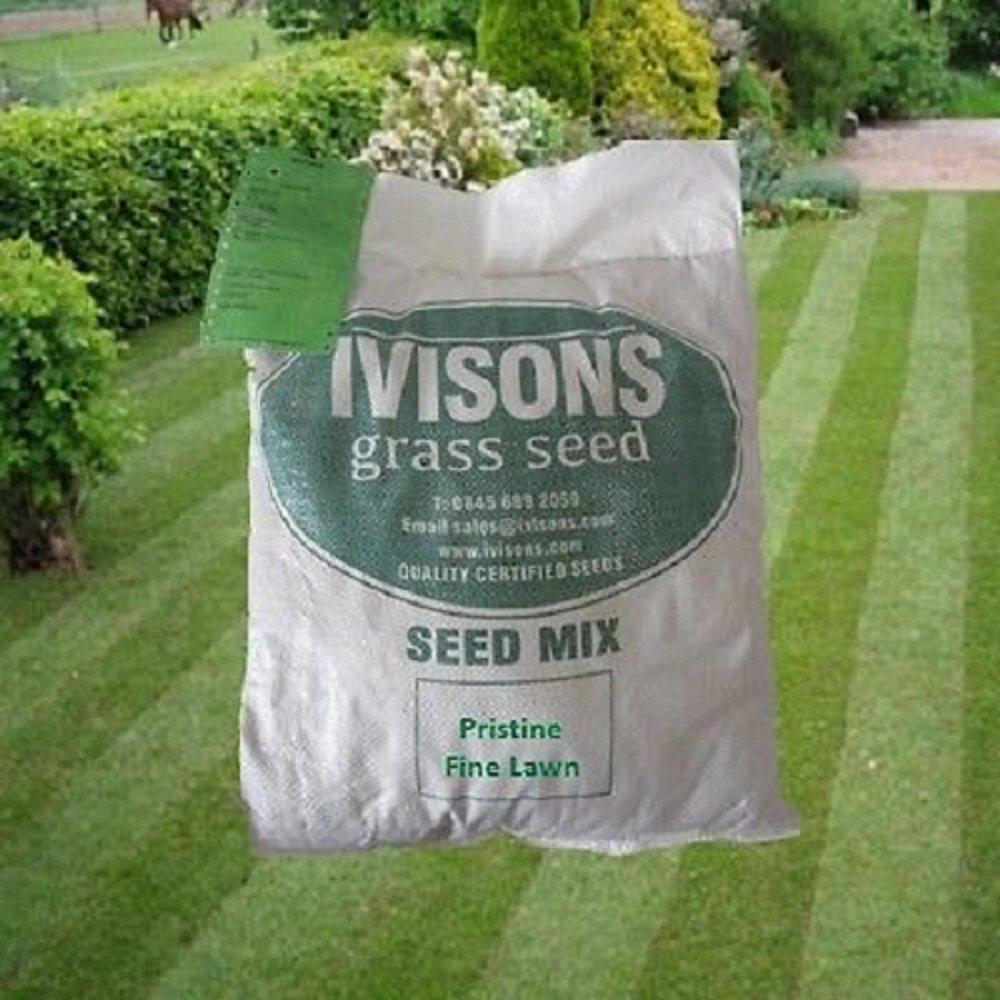 2 Kg Pristine Ornamental Grass Seed Fine Lawn Seed No Rye Grass Ivisons Seeds