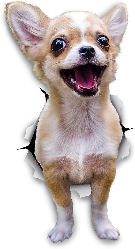 Winston & Bear Perro 3D pegatinas - Pack 2 - Chihuahua emocionado ...