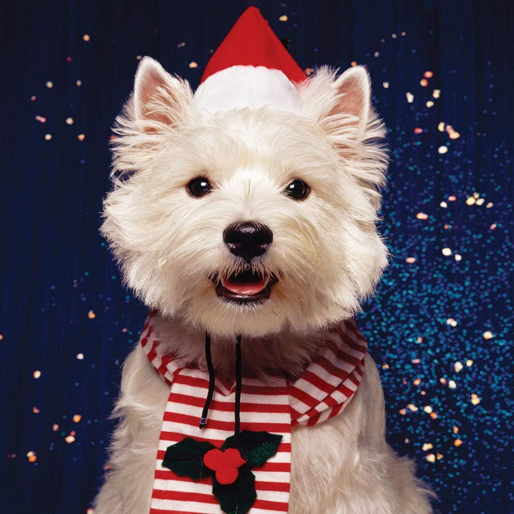 Westie Charity Christmas Cards Pack of 5 West Highland White Terrier ...