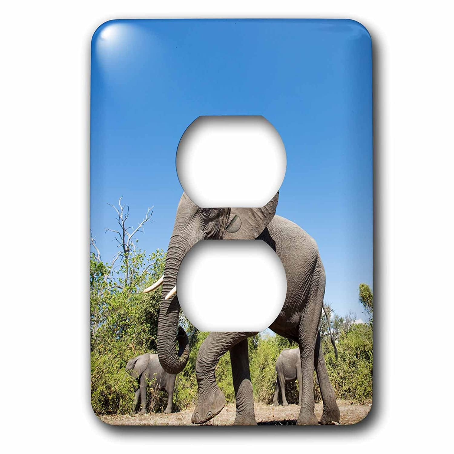 Chobe NP 3dRose LSP/_224919/_6 Botswana African Elephant Walking in mopane Forest 2 Plug Outlet Cover