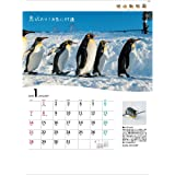 TD-30893 旭山動物園カレンダー(2018年版)