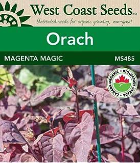Orach Seeds - Aurora Organic: Amazon ca: Patio, Lawn & Garden