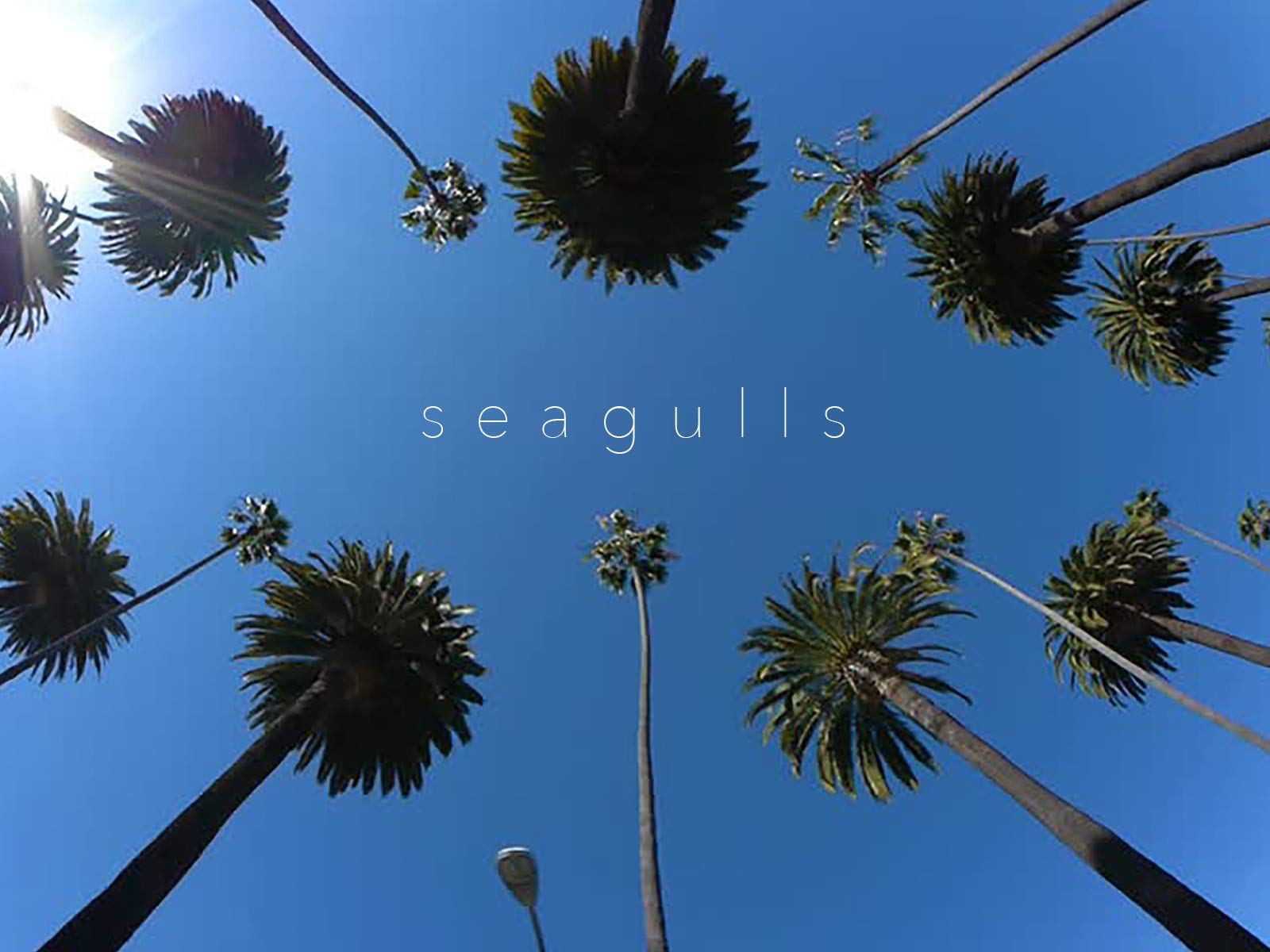 Seagulls on Amazon Prime Video UK