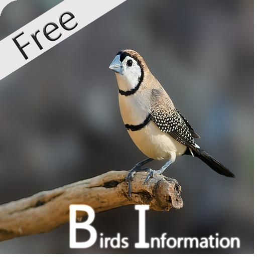 New Best Birds Guide. (Best Bird Guide App)