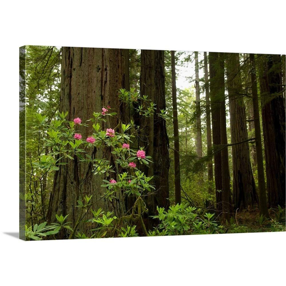 キャンバス上需要プレミアムthick-wrapキャンバス壁アートプリントレッドウッドと花というタイトルのdel Norte Coast Redwoods状態公園、カリフォルニア 48