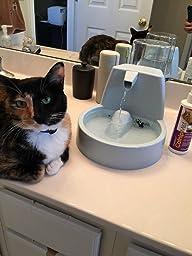 Amazon Com Petsafe Drinkwell Original Pet Fountain Pet