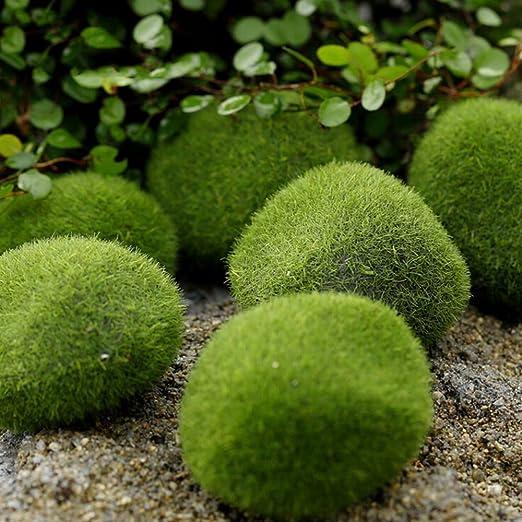 Comficent Bolas de musgo para acuario, Plantas acuáticas para pecera o acuario para plantas vivas, bola de musgo ecológica, adorno para pecera: Amazon.es: ...