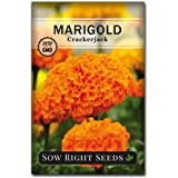 Sow Right Seeds Crackerjack Marigold Seeds - Full Instructions for Planting, Beautiful to Plant in Your Flower Garden…
