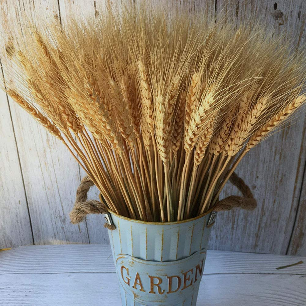 PerfiCap Wheat Stalks, 100Pcs Natural Ear of Wheat Grain Flowers for Home Dining Table Arrangement Flower Art Wedding Decoration