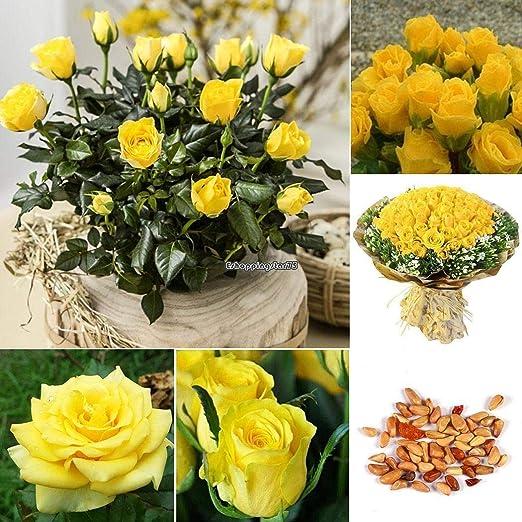 AGROBITS 2: Cultivar un huerto casero Balcón Planta Bonsai Yellow ...