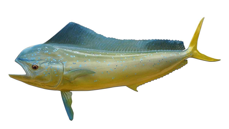 大きな割引 Mahi半分マウント魚レプリカ 42\、釣り壁& B01IPSN3FM Coastal Decor Coastal 42\ B01IPSN3FM, カウイマ:1165f3c3 --- kickit.co.ke