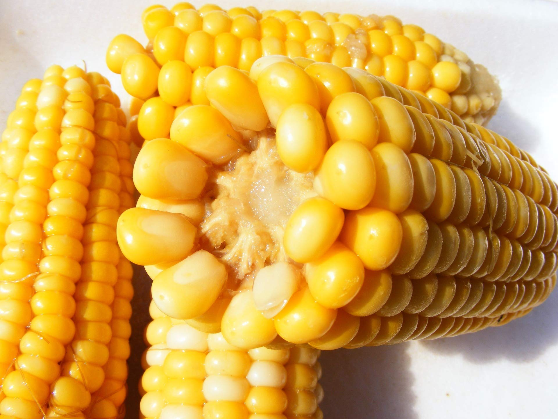Golden Bantam Corn Sweet Heirloom binC1 (9500 Seeds, or 5 lb)