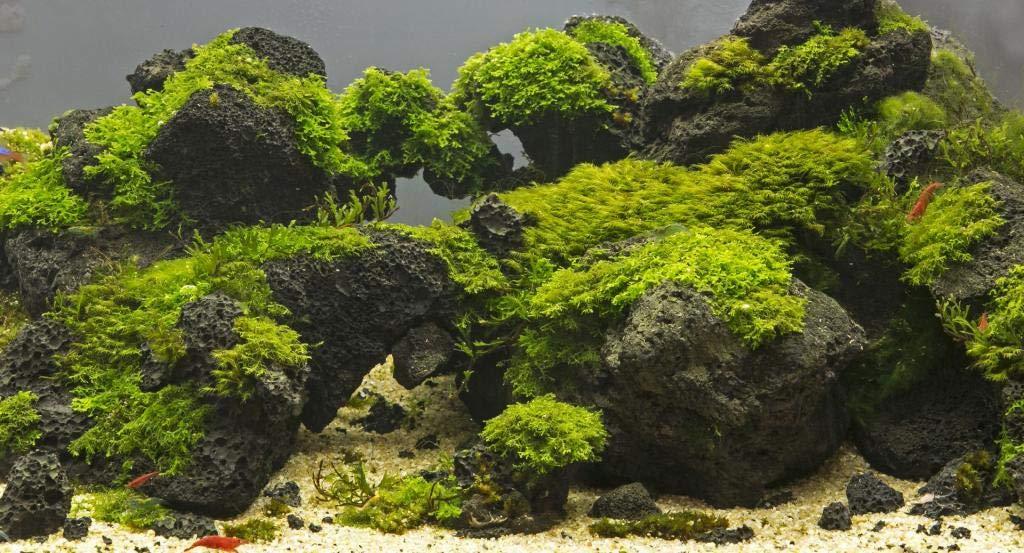 5kg Set Aquarium Stone Fish Tank Decoration Aquascaping Malawi Natural Black Volcanic Lava Rock