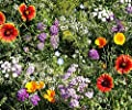 Beneficial Bug Attracting Wildflower Seeds to Attract Bees, Butterflies, and other Beneficial Insects