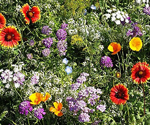 Beneficial Bug Attracting Wildflower Seeds to Attract Bees, Butterflies, and other Beneficial (Seed Blanket)