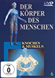 Der Körper des Menschen 6 - Knochen und Muskeln