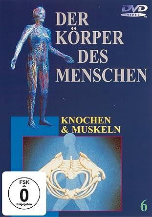 Der Körper des Menschen 6 - Knochen und Muskeln: Amazon.de: der ...