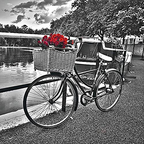 Rosas románticas I Assaf Frank paisaje fotografía bicicleta ...