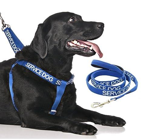 Juego de arnés y correa para perros con el texto SERVICE DOG ...