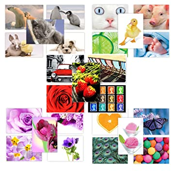 50 Cuddly Creatures new postcards 10 pretty /& cute animals by The Postcard Store