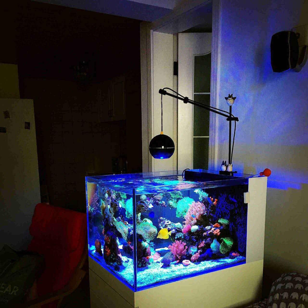 LED licht korallen wachsen meerwasser riff tank wei? blau aquarium tank sps lps farbe wachsen mini nano drahtlose steuerung iphone app