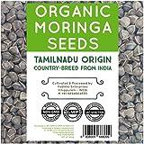 NumNum Superfoods 500 GMS (1.1 Lb) Organic Moringa Seeds Original Tamilnadu Country Breed High Therapeutic Values - Moringa Oleifera Seeds - Dried Drumstick Kernels - Wingless Moringa Tree Seeds
