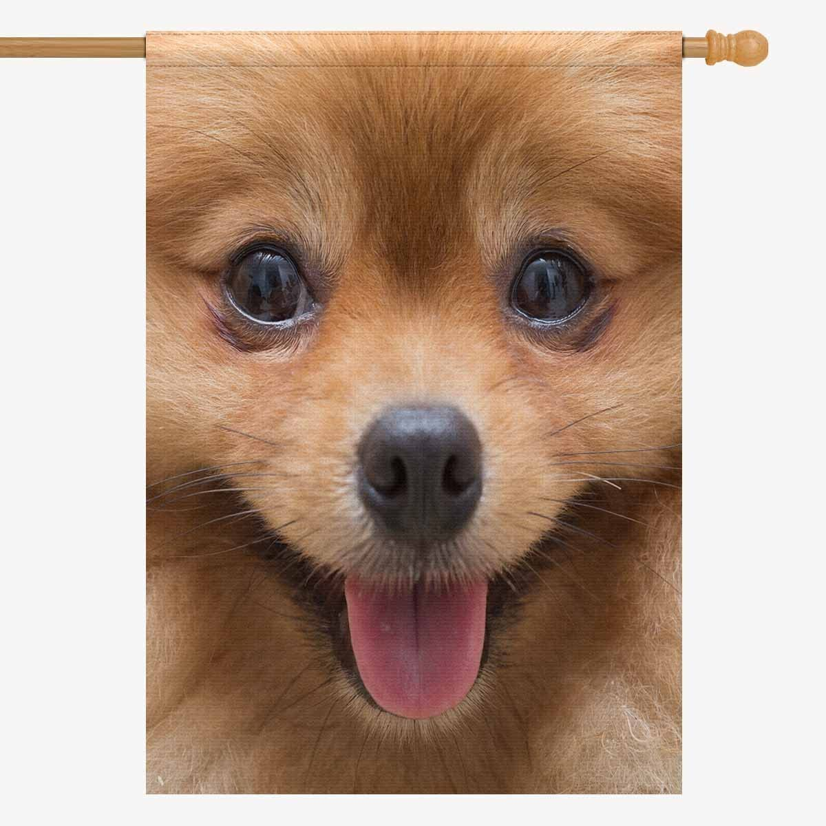 Amazon Com Interestprint House Flag House Banner Cute Puppy Pomeranian Dog Cute Pets Decorative Yard Flag For Wishing Party Home Outdoor Decor Oxford Cloth 28 X 40 Without Flagpole Garden