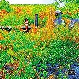 Trip [2 CD]