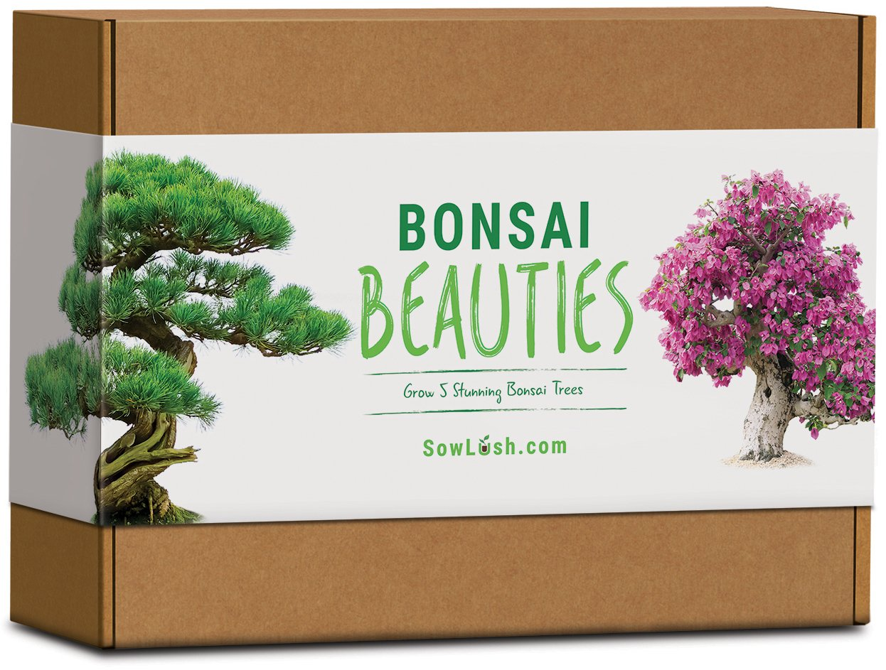 Bonsai Beauties Gift Seed Kit. Everything You Need to Grow 5 Stunning Varieties of Bonsai Trees Sow Lush